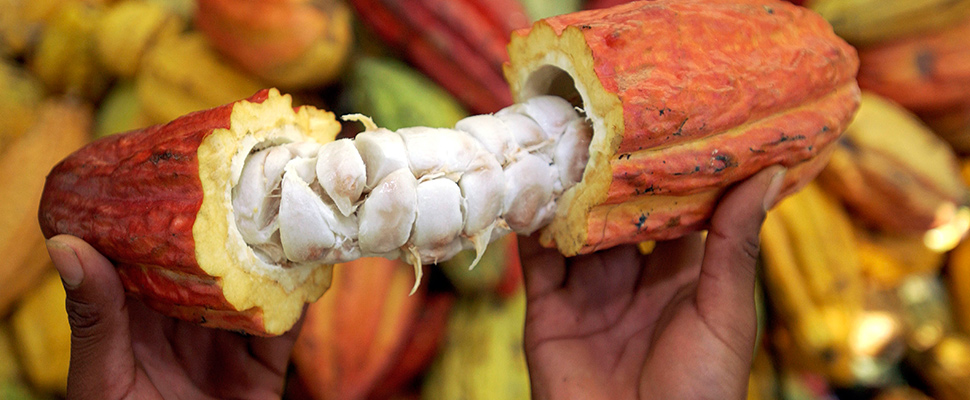 Colombia: is cocoa is the new cocaine?