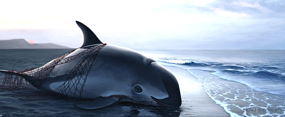 Mexico: the Chinese elite is the major enemy of the Vaquita